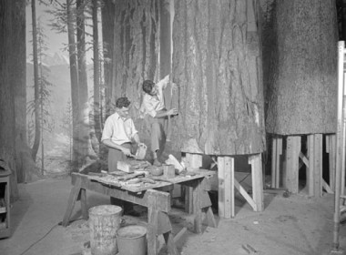 tree_construction_530.jpg