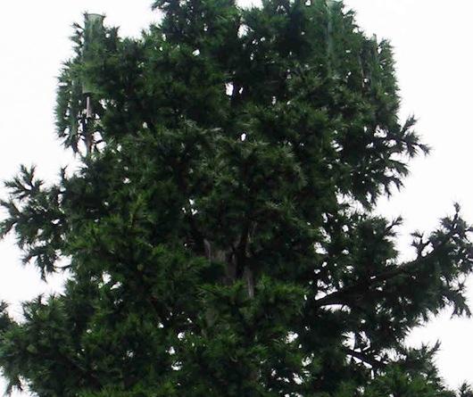 antenna tree mast