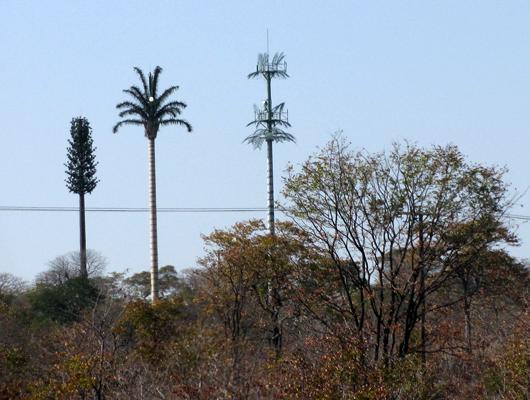 antenna_tree_mast37