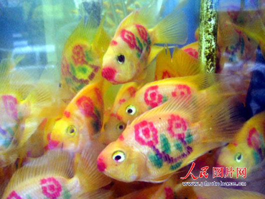 tattooed_goldfishes_530.jpg