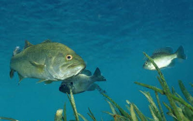 transsexual-fish1.jpg