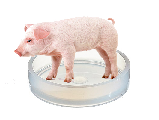 Petri Pig