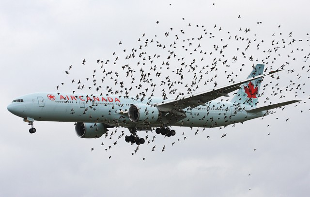 airliner_with_birds
