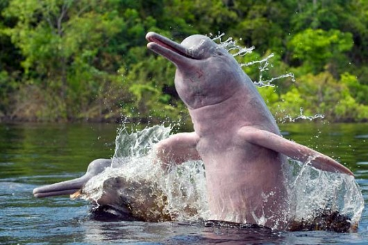 happy-dolphin-530x353