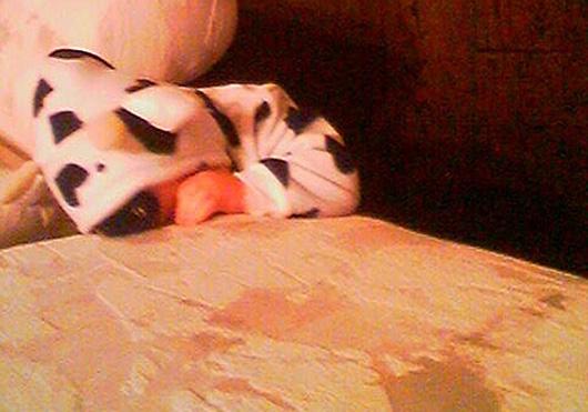 cow-costume530