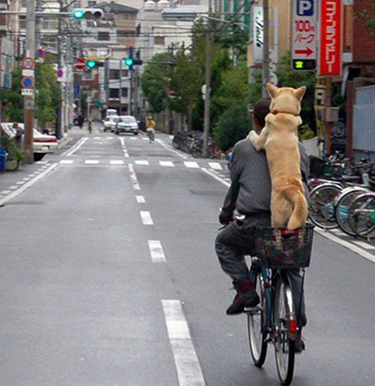 dog_bicycle_edit