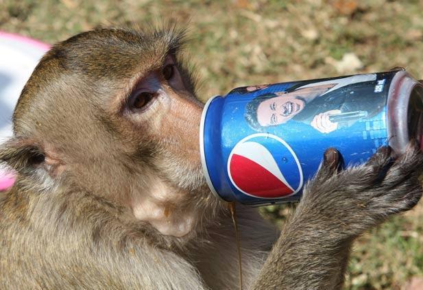 monkey pepsi