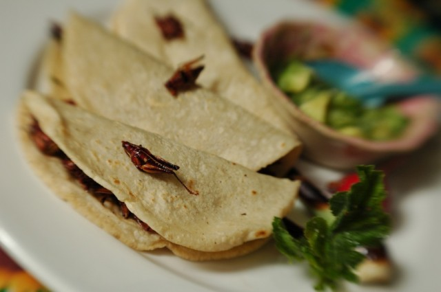 chapulines tacos