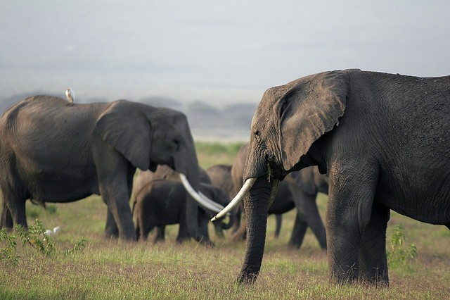 elephant noosphere