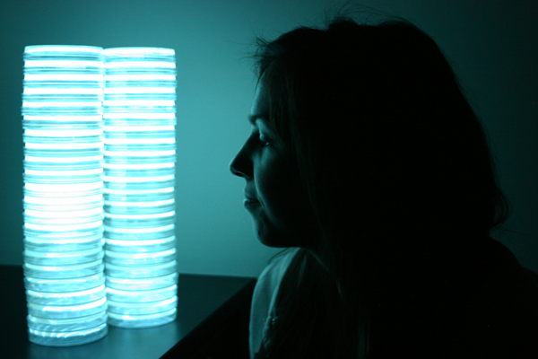 biolum bacteria