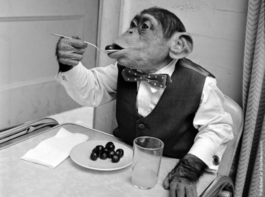 chimp eating grapes