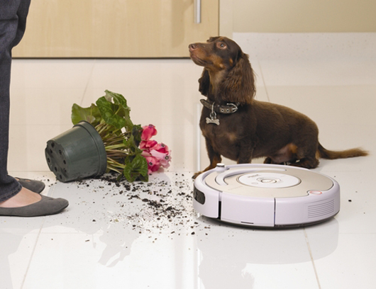 dog and roomba