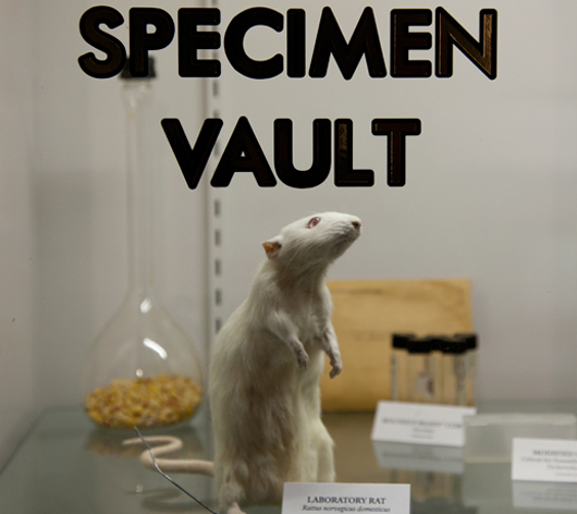 1st-pic-SpecimenVault_Rat