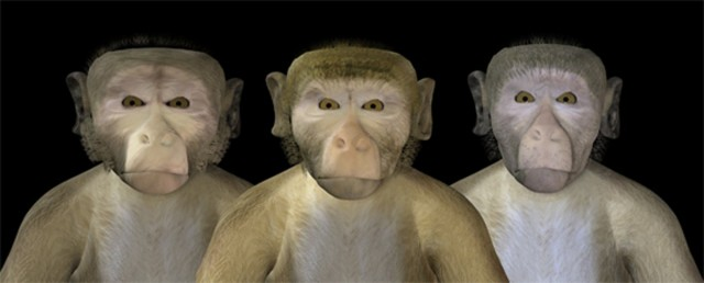 monkey-uncanny-valley