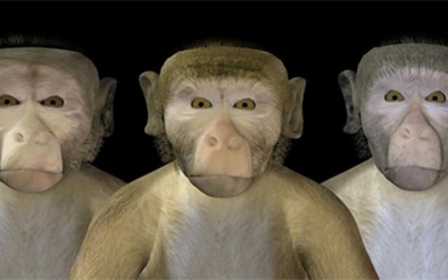 monkey-uncanny-valley