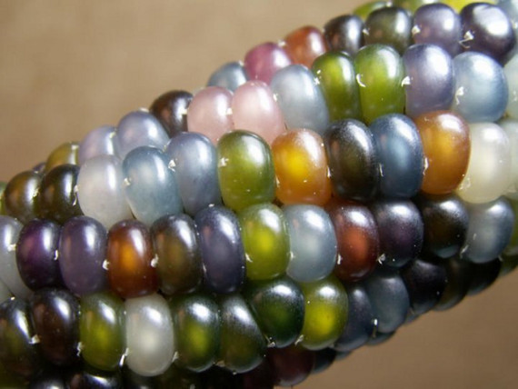 glass gem corn rainbow