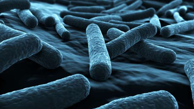 bacteria turn carbon into fuel