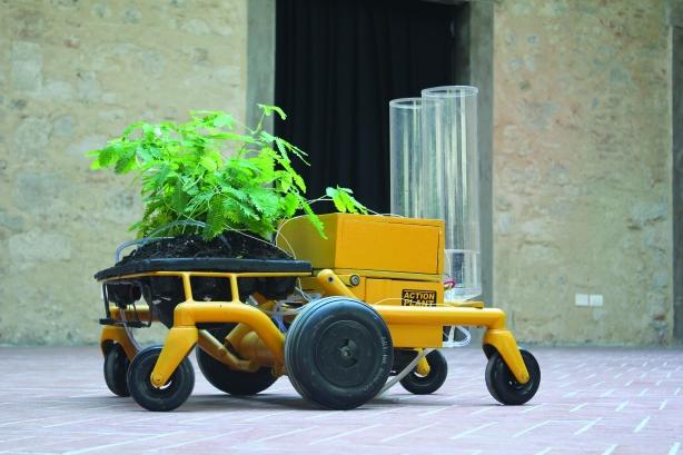 jurema action plant robot