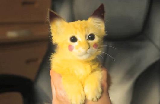 pikachu-pussy_530