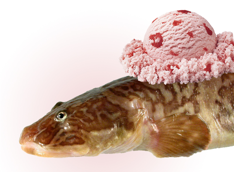 Antifreeze from fish blood keeps low fat ice cream rich for Protein in fish