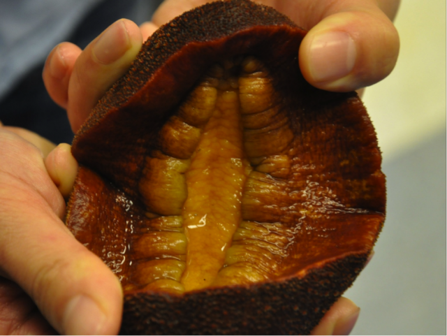 snail-teeth_anastasia