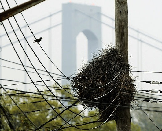 bird nest in new york