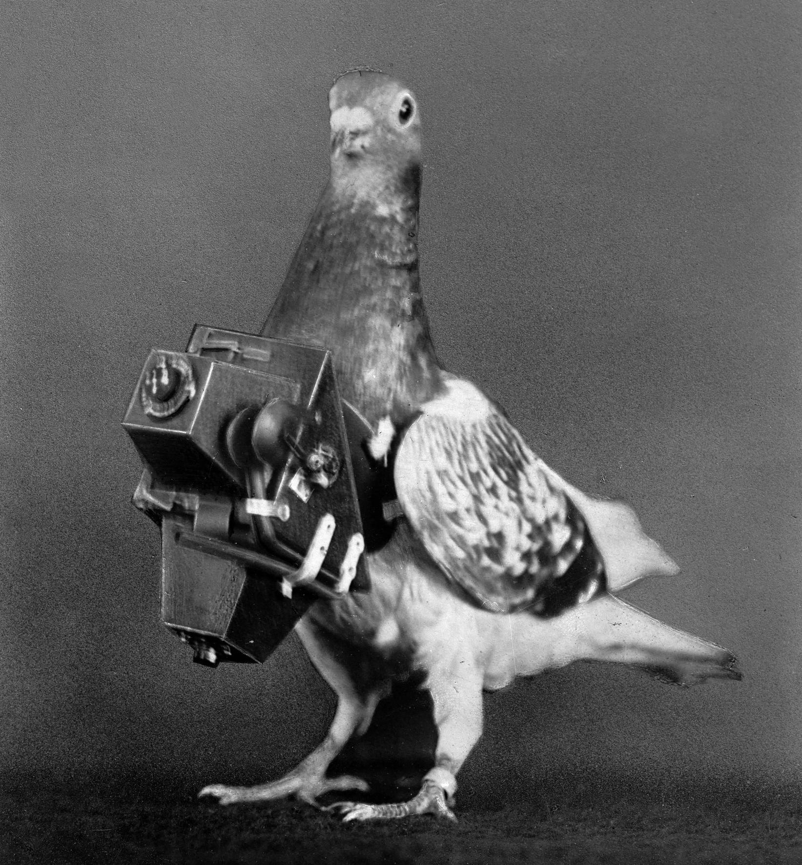 From 1908, pigeons were fitted with cameras to take aerial photos. Photograph: Boyer/Roger Viollet/Getty