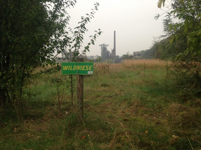 """""""Wild meadow"""" - in the middle of the Ruhr industrial region, new forms of nature are on the rise"""
