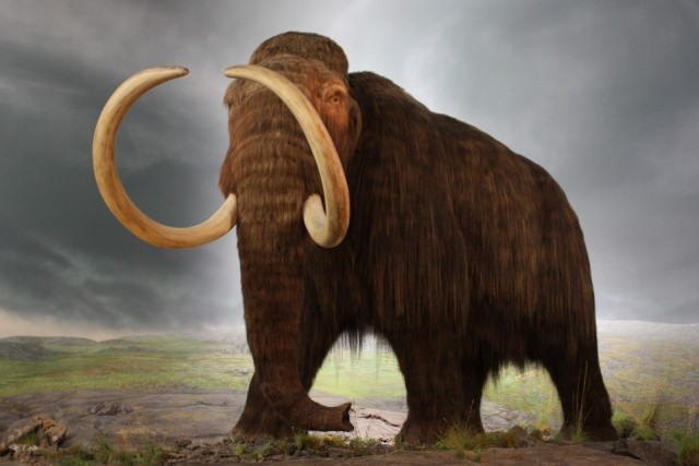 wooly_mammoth_model