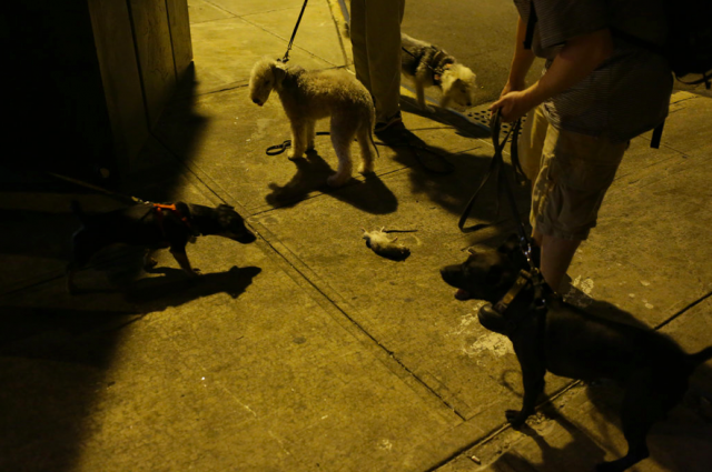 new york city dogs hunt for rats