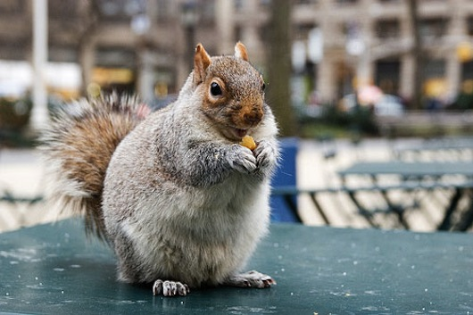 the reason why cities have squirrels