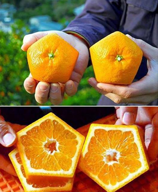 Pentagonal Oranges 2