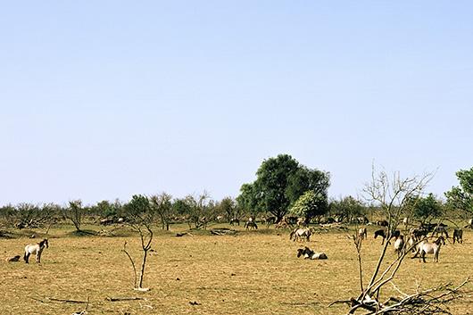 DenisGuzzo_2011_05_Oostwardersplassen_Illusional-biosphere-I_530v2