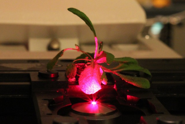 1nanobionic_plant