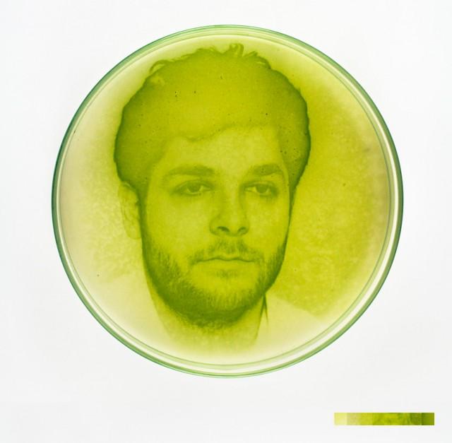 Algae Photograph