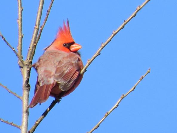 angrybirdsinreallife