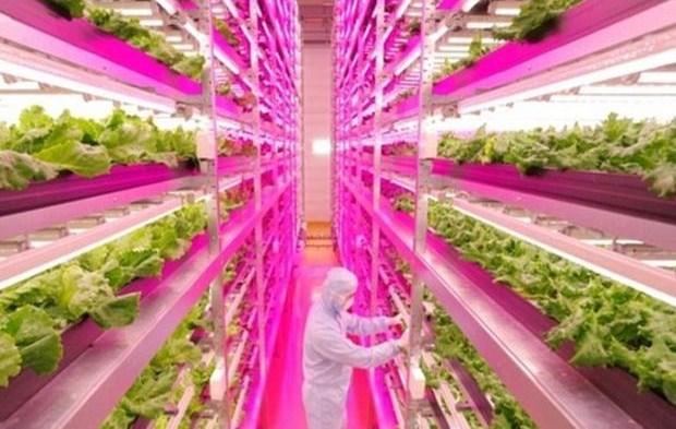 indoor-farm
