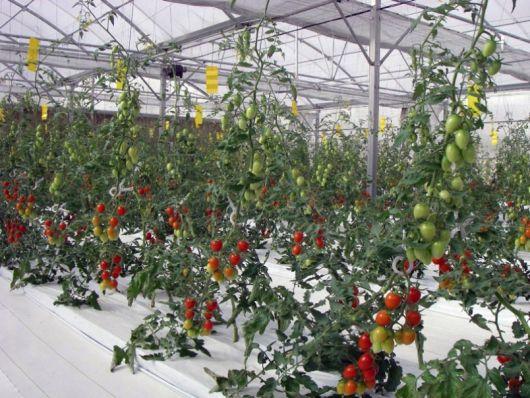 Hydrogel farming