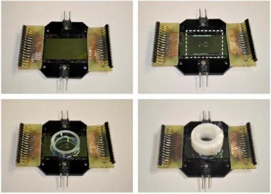 nanoelectric-scaffold-culture-640x460