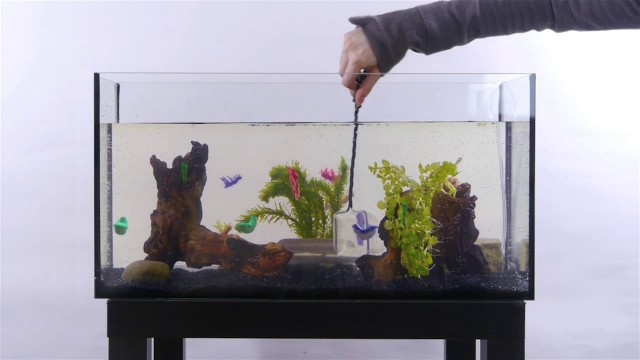 Teppanyaki-from-the-In-Vitro-Aquarium-Bistro-In-Vitro
