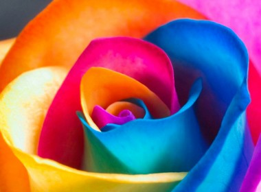 roses-arc-en-ciel-en-3-etapes