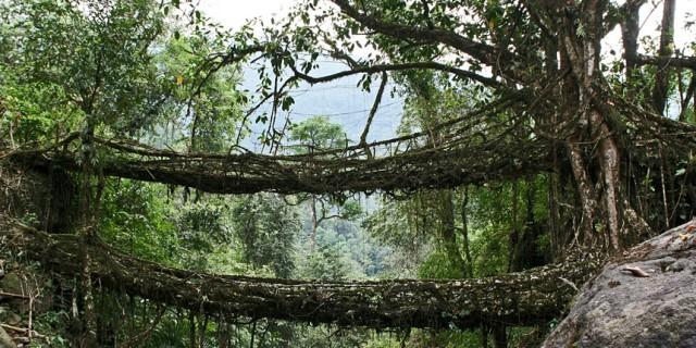 root-bridge
