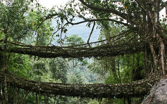 root-bridge