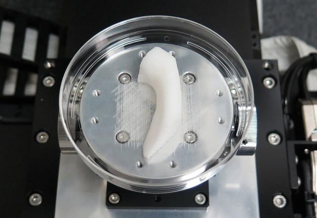 bio printed body parts