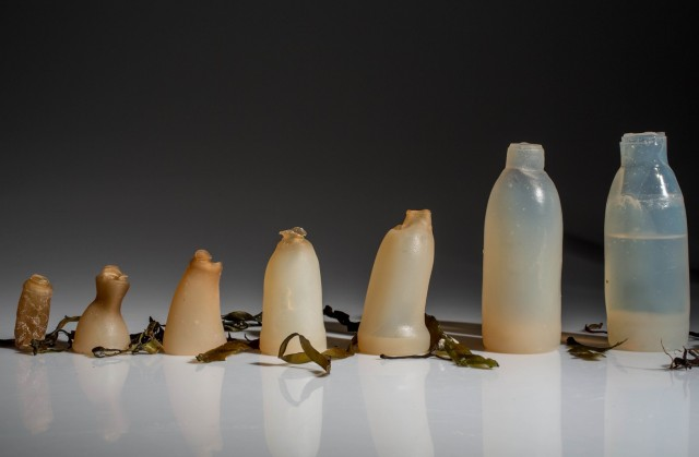 Water bottle created from algae