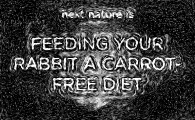 Feeding your rabbit a carrot-free diet