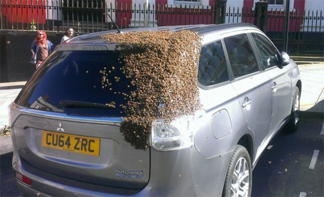 car chased from bees for 2 days