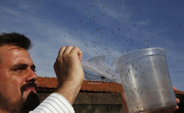 mosquitoes extinction