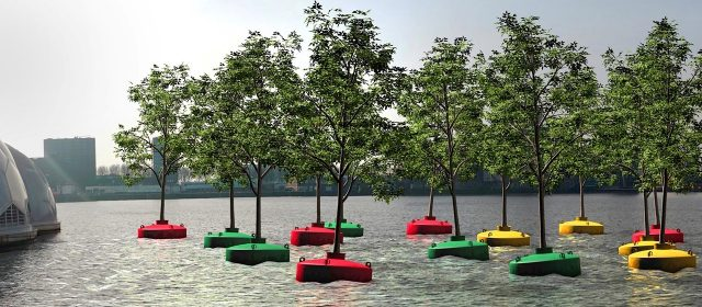 Floating trees in Rotterdam