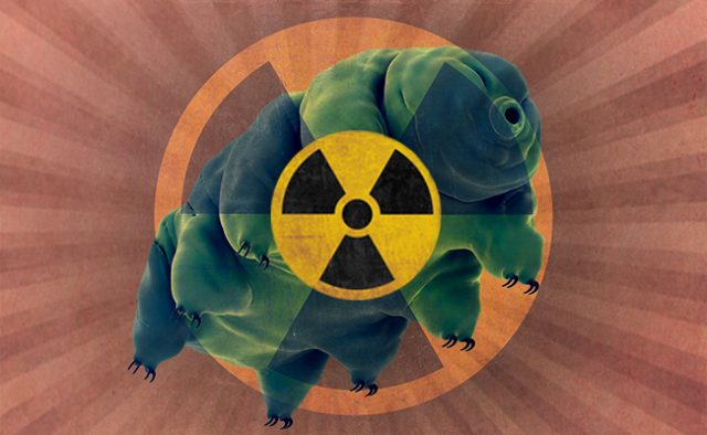 Water Bear Withstands X Ray Radiation